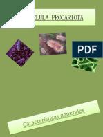 Expo Células Procariotas
