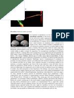 Las Neuronas Se Reproducen (Revisar)