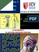 Neurona y Sistema Nervioso