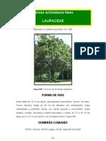 Persea schiedeana