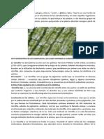 Las Clorofilas (1)