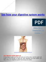 Digestive System Works