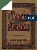 Tame Animals