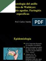 Amigdalas (CMartin)