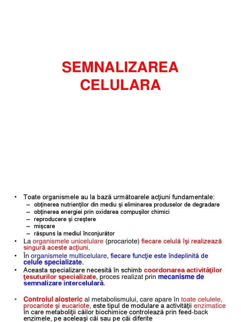 diviziunea celulelor penisului)