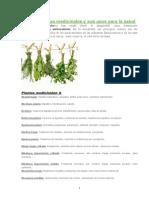 Las 230 Plantas Medicinales y Sus Usos Para La Salud