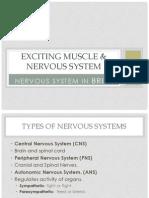 5d neurons and neuroglial cells1a