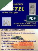 es-presentacion-germinados-ecologicos.ppt