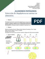 Staphylococcus aureus (1).docx