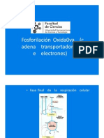 (272373788) Clase Fosforilacion Oxidativa