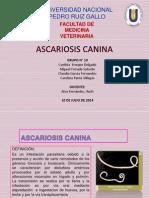 Ascariosis Canina