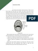 Makalah Anatomi Fisiologi Histologi Gigi Dan Mulut (Dimas)