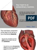 VB Circulatory Structures