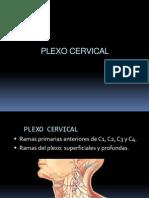 PLEXOCERVICAL.ppt
