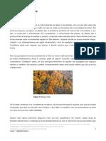 flora do concelho de Seia.pdf