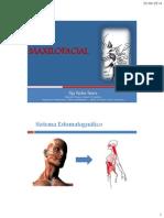 Maxilo Anatomia Clase 2