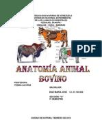Anatomia Producción Animal
