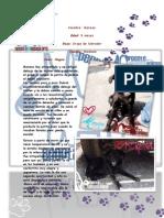 Perritos Adoptables Gepda Enero 2013