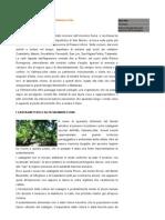 Altoirea castanilor (spaniola)