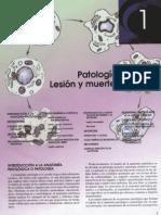 01. Patología Celular I. Lesión y Muerte Celulares