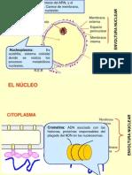 Biología Celular [III-IV Unidad]