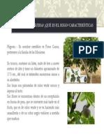 Producción de Higo P1_002