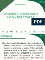 68-Apresentacao Sobre Metodos de Coleta Em Caninos e Felinos