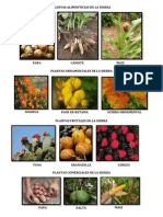 Plantas Costa Sierra y Selva