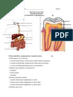 Test Sistemul Digestiv