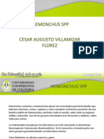Haemonchus Sp