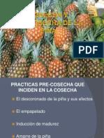 Expo Poscosecha Piña