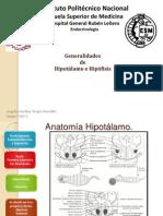 Generalidades Hipotálamo e Hipófisis (1)