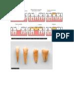 Imagenes Dentales