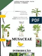 musaceae - apresentação