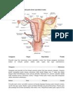 Kelainan Dan Penyakit Pada Sistem Reproduksi Wanita