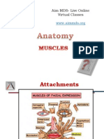 Anatomy - Muscles