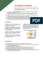 CARIOGENESIS.pdf