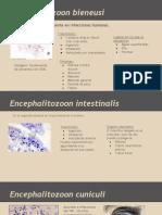 Microporidios