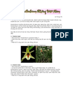 Catalog Viet Nam's Dendrobium