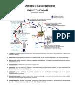 Revisodosciclosbiolgicos 130930161439 Phpapp01 (1)