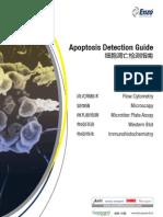 Apoptosis Detection