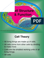 cell structure pp -best