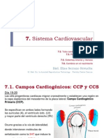 7. Sistema Cardiovascular
