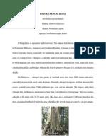 Pokok Chengal (Neobalanocarpus Hemii) (1) Nazrul