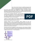 Pathophysiology of Typhoid Fever