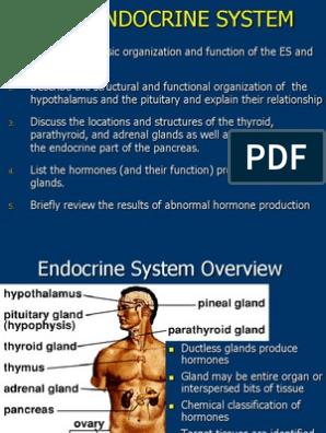 Olumide Pidan Olumide Adeola Pidan Pituitary Gland Endocrine System
