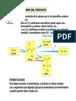 Metabolismo Del Piruvato