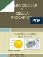 Núcleo Celular y Célula Procariota