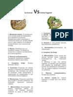 Célula Animal vs Célula Vegetal