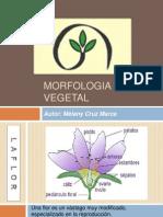 MORFOLOGIA VEGETAL.pptx